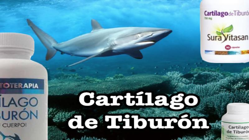 cartilago de tiburon